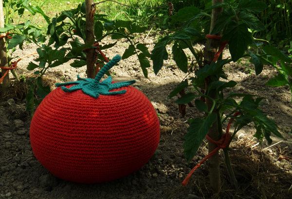 La tomate géante