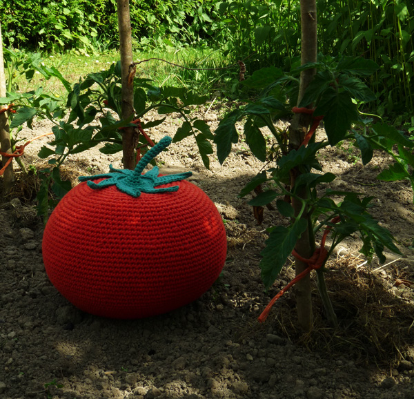 tomate-jardin