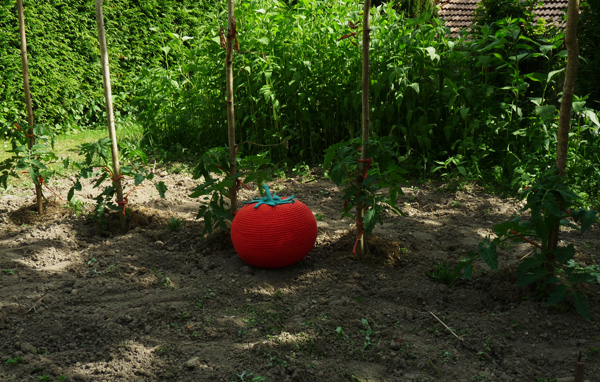 tomate-jardin2